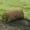 Рулонный газон. Прекрасно переносит холод и жару+79278-913-119 #33008