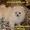 Карликовые эксклюзивные щеночки померанского шпица vip-classa! #765971