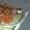 Аппарат Вязальный обматывающий пресс-подборщика тюкового ПТ-165 - Изображение #1, Объявление #783178