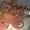 Аппарат Вязальный обматывающий пресс-подборщика тюкового ПТ-165 - Изображение #5, Объявление #783178