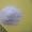 Белый кварцевый песок (горный,  дроблёный) #1302329