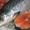 Форель,  семга,  рыба,  морепродукты #1626002