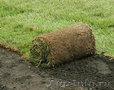 Рулонный газон. Прекрасно переносит холод и жару+79278-913-119, Объявление #33008