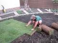 Акция!!!!Рулонный газон, 135 руб рулон  +7927-777-05-75 - Изображение #2, Объявление #225404