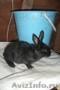 Кролики по 800рублей