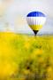 Полеты на воздушном шаре!