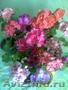 Цветущие герань, гибискус разных цветов и др.цветы распродаю