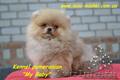 Карликовые эксклюзивные щеночки померанского шпица vip-classa! - Изображение #2, Объявление #765971