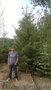 Продаем деревья и кустарники
