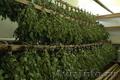продам веники для бани (дуб,липа, берёза) - Изображение #2, Объявление #1495940