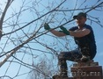Сезонная чистка сада.+79277770575 Самара, Тольятти, Сызрань, Жигулевск, Объявление #1538106