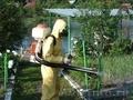 Уничтожение муравьев в доме и на участке